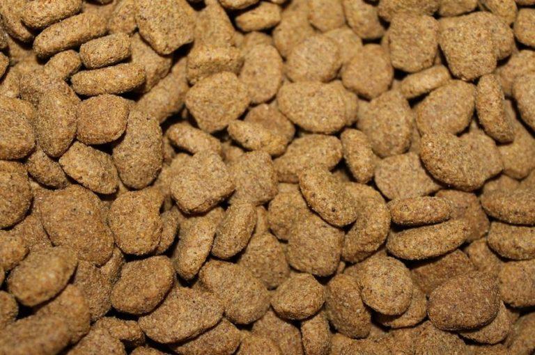 croquettes bio pour chien