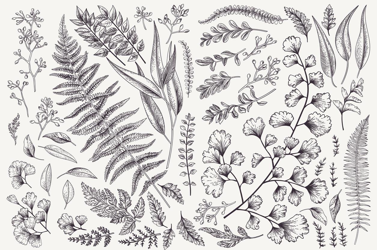 Serti de feuilles et de fougères
