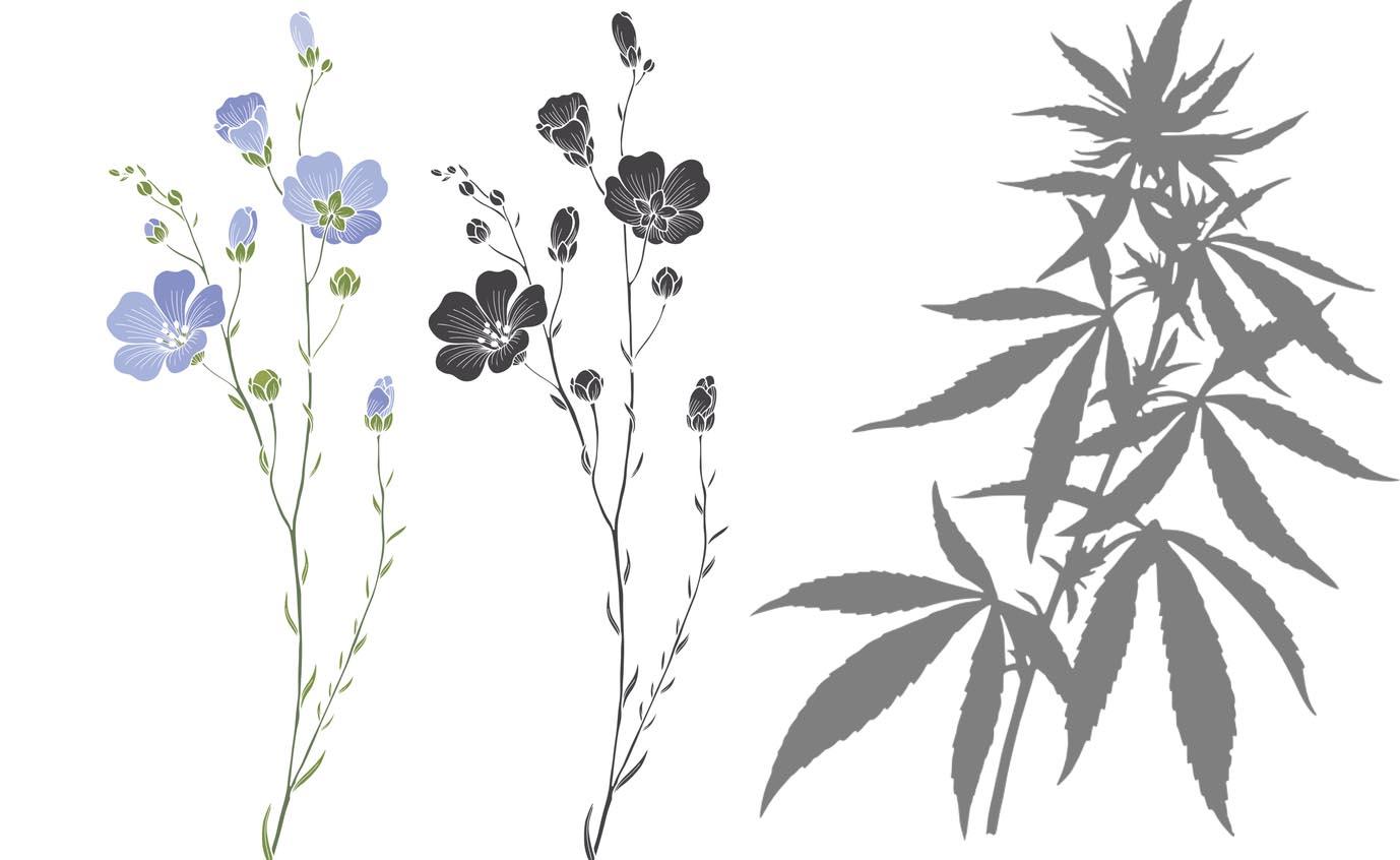 illustration de chanvre et lin