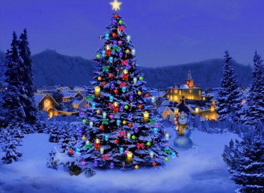 Sapin De Noel naturel
