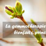 Gemmotherapie Illustration Plante Macerat