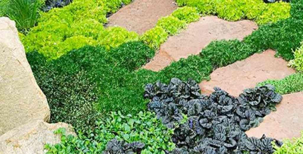 Plante Couvre Sol Remplacer Gazon
